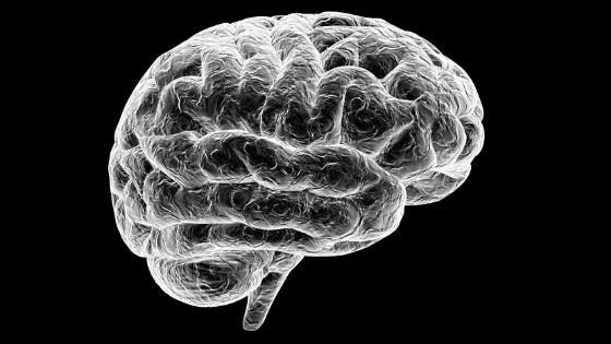 How Google RankBrain Works for SEO - black and white brain